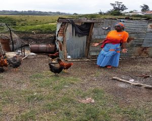 Nombeko, the go- getter and a few friends are now 'growing' chickens to subsidize their income from the woodlot!!